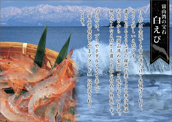 富山湾の宝石白えび